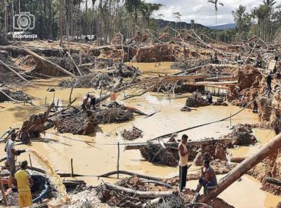 Mafias en Alto Paragua :explotacion de oro y destruccion de la naturaleza en la Guayana Venezolana